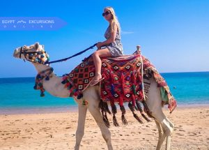Camel Ride and Bedouin Dinner Show in the Sinai Desert
